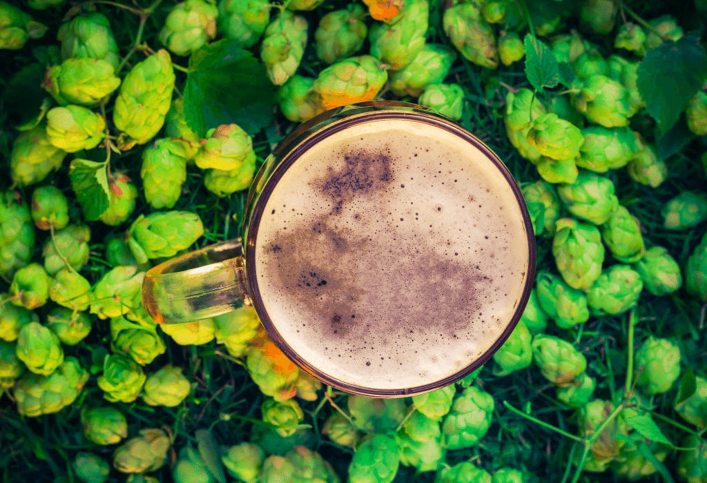 6 Beers to try this International Beer Day